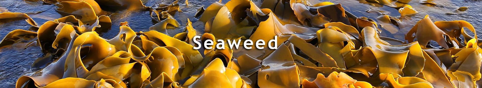 TourTurf<sup>®</sup> Algae Plus Seaweed